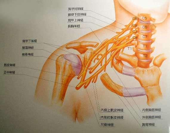 神経 症 頚椎 症 性 根